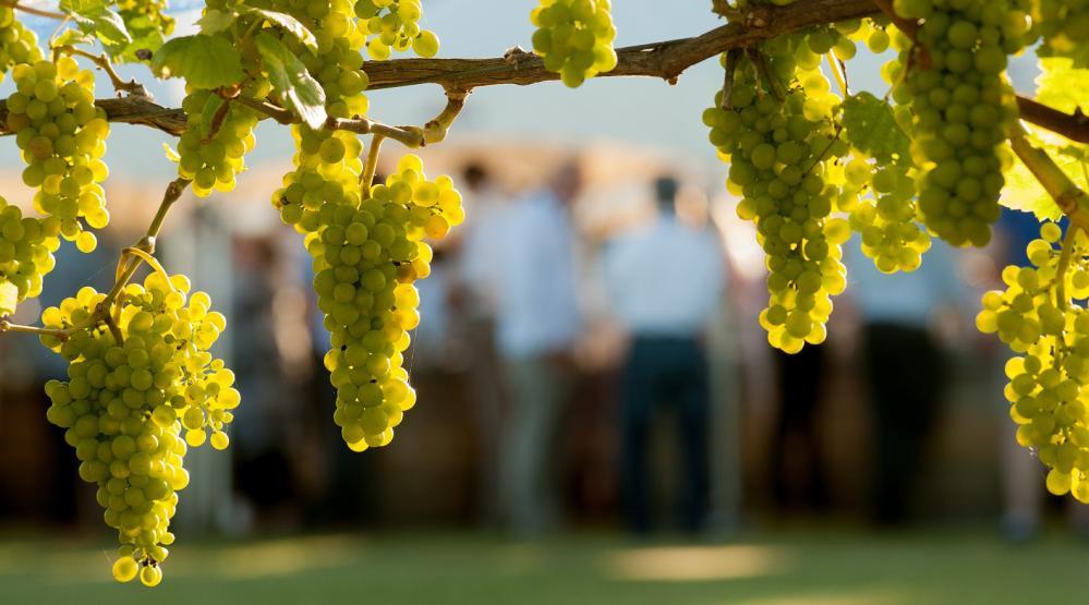 Wine Searcher 发表除勃艮第之外的世界十大最受欢迎的霞多丽